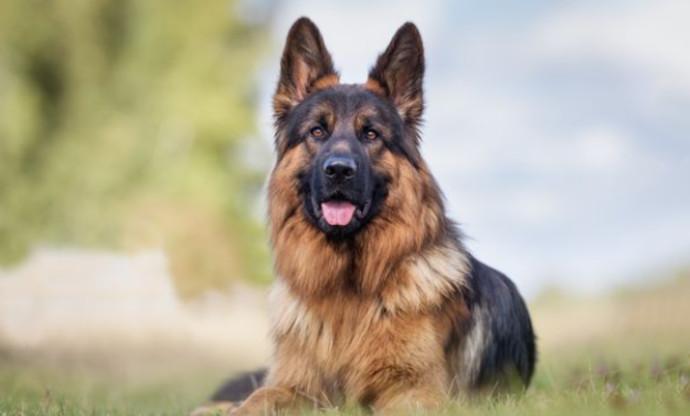 הכלב גונתר השלישי