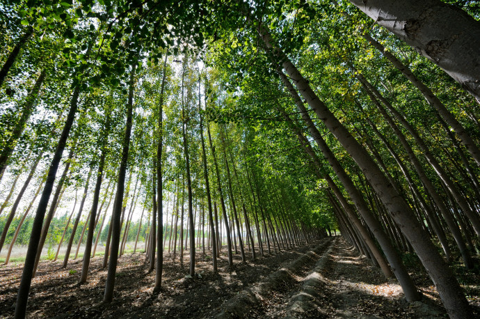 יער, אילוסטרציה