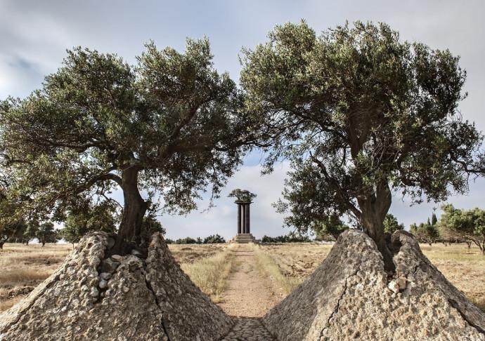 פארק עצי הזית ברמת רחל