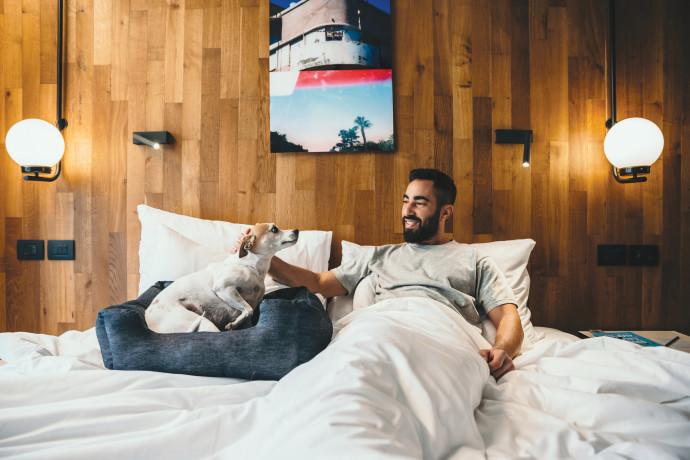 כלב במלון אטלס