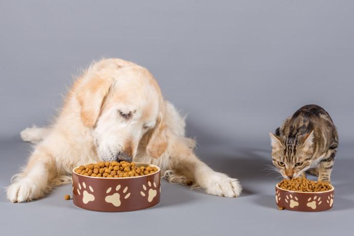מזון לכלבים וחתולים