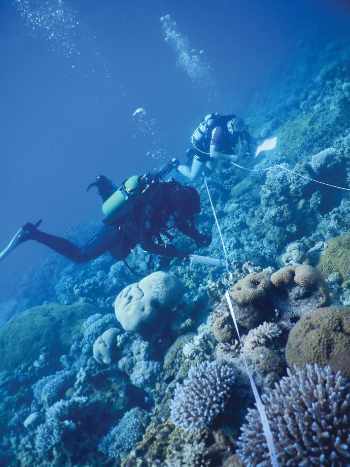 שונית האלמוגים במפרץ אילת