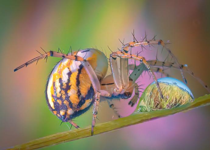 שיט אני מחבבת חרקים עכשיו