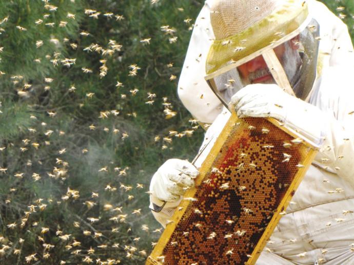 דבוראים בגליל