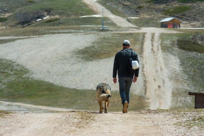 טיול עם הכלב, אילוסטרציה