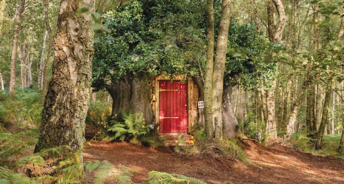 הבית הקסום של פו הדוב שעומד להשכרה
