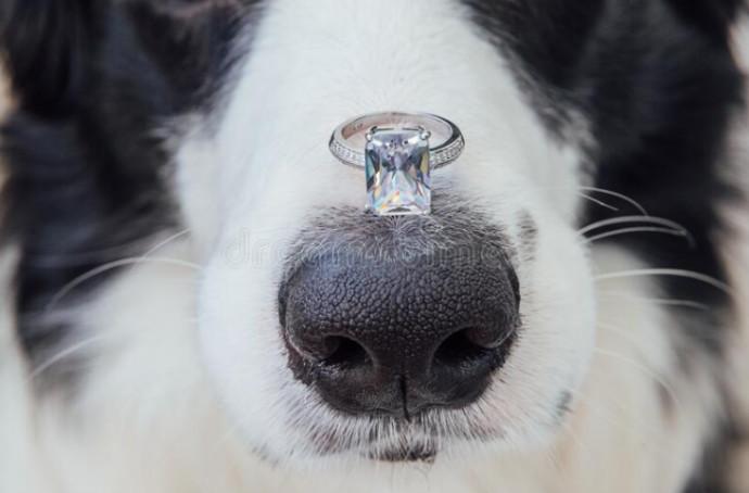 הצעת נישואין עם כלב, אילוסטרציה