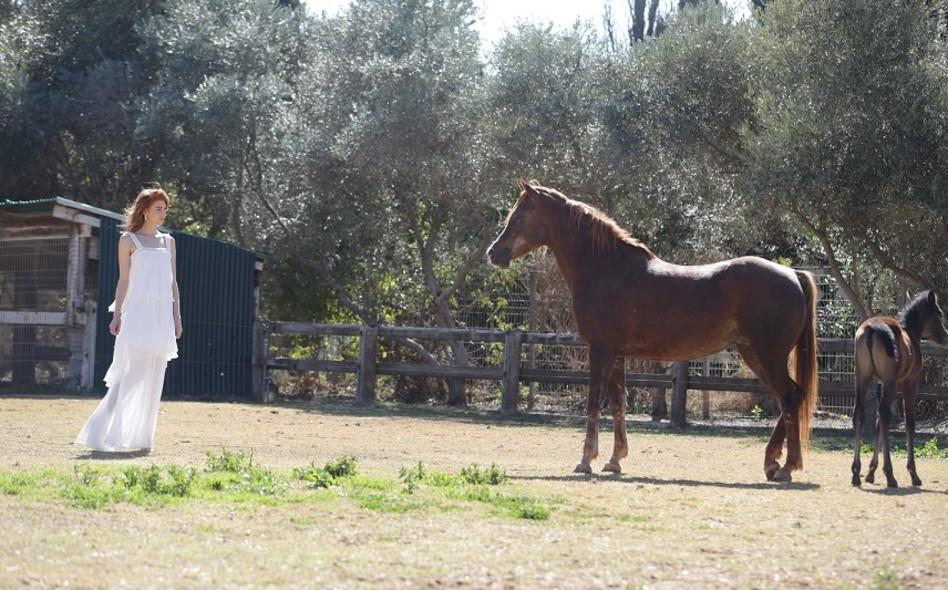 סוס יקר שמור מרחק