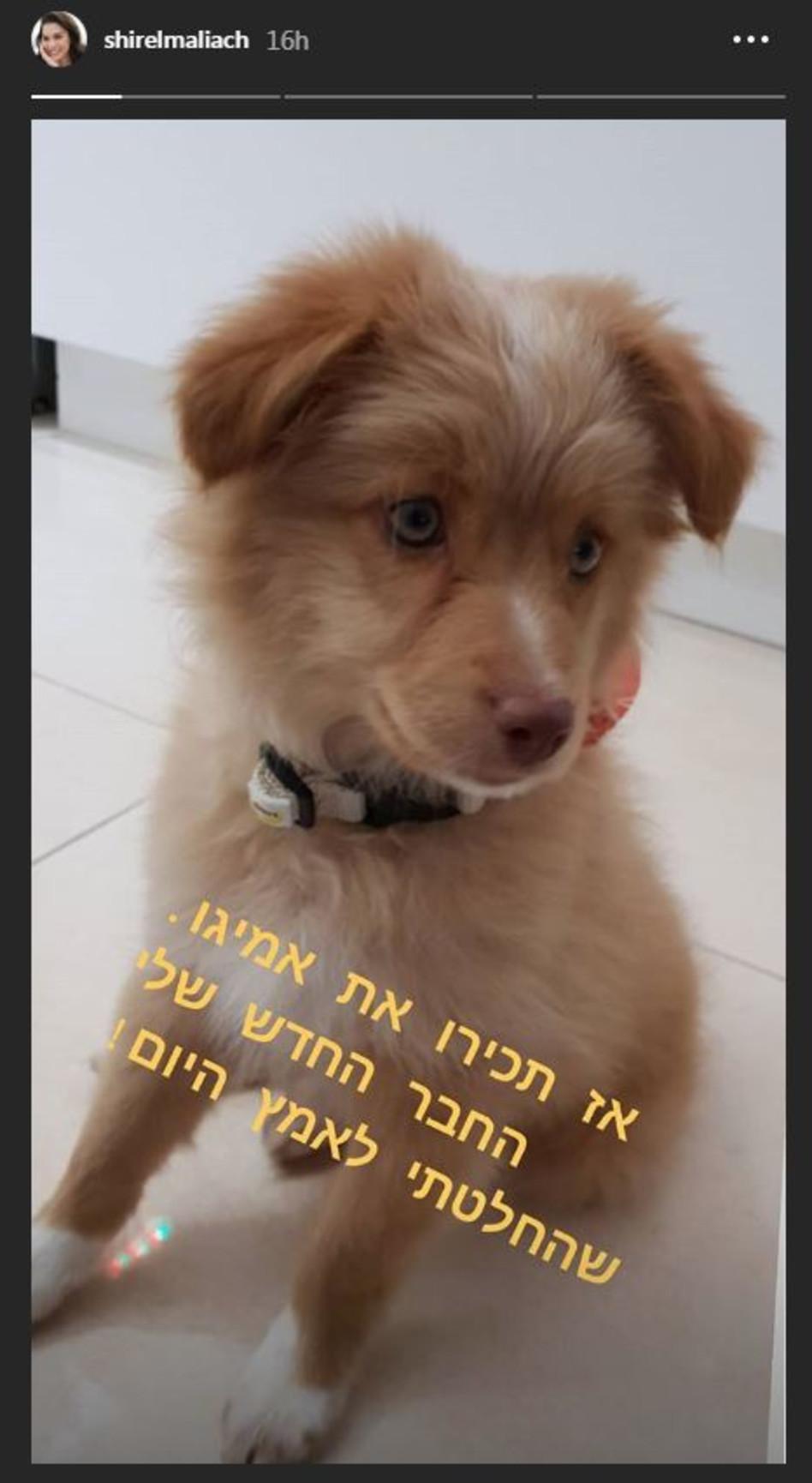 חמידות. הכלב החדש של שיר אלמליח (צילום: אינסטגרם)