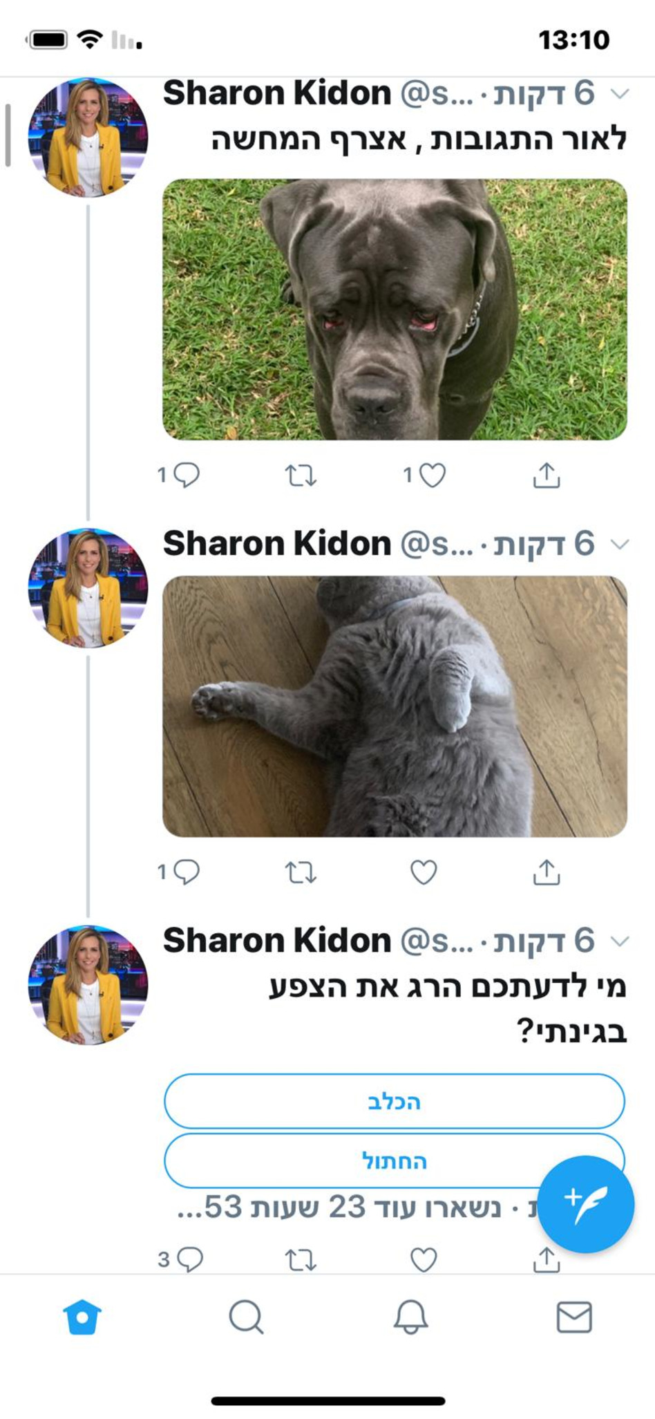 החתול או הכלב? (צילום: טוויטר)