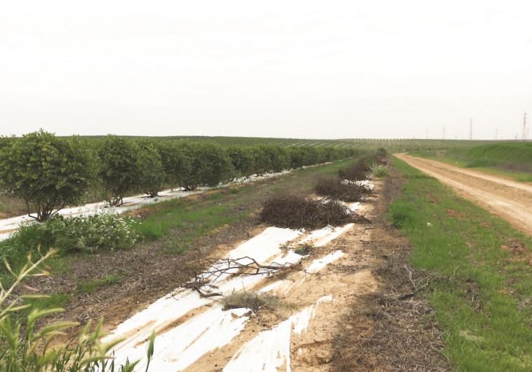 שטח חקלאי בבית קמה