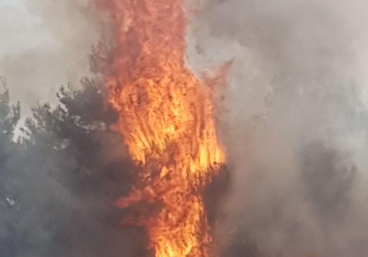 שריפה בעוטף עזה - טרור העפיפונים. צילום: טל לב רם