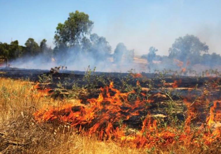 שדות כיסופים עולים בלהבות. צילום: אריאל בשור