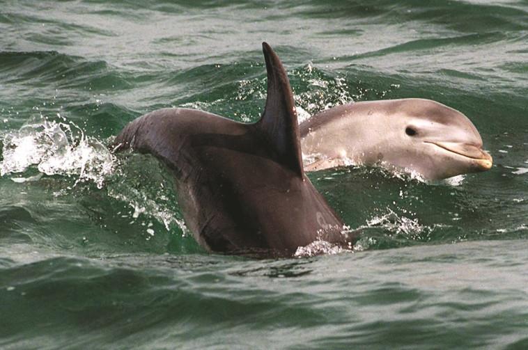 """""""דומה לשיחה בין שני אנשים"""". דולפינים. צילום: רויטרס"""