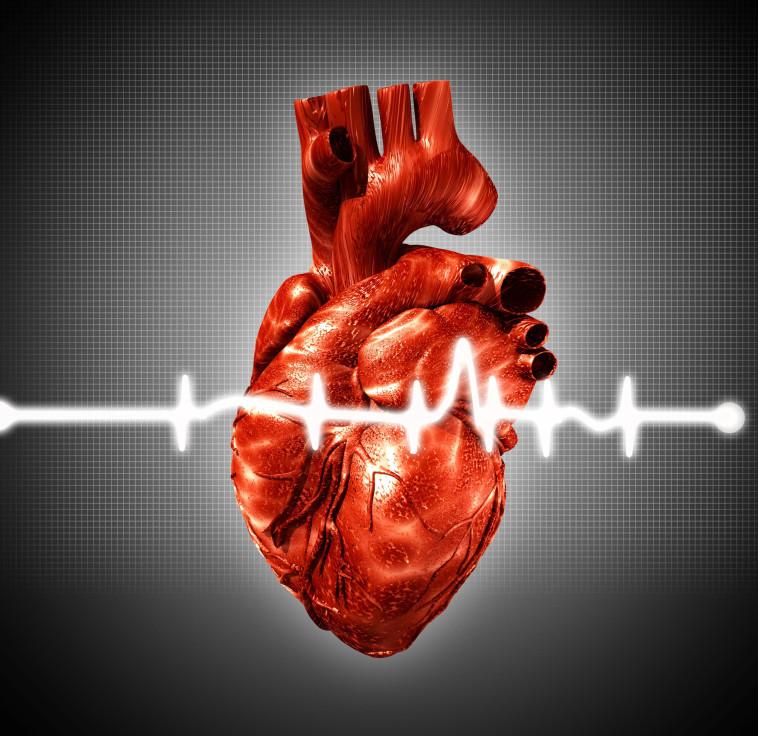 לב, אילוסטרציה. צילום: אינג אימג'