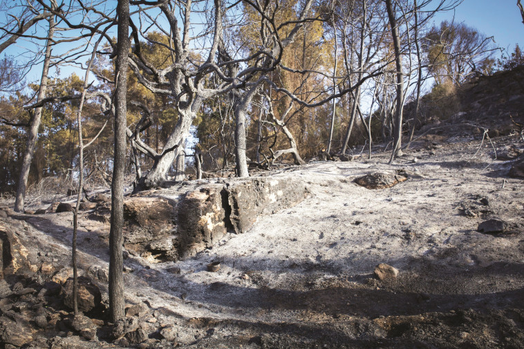 השריפה בזכרון יעקב. צילום: דורון הורביץ, פלאש 90