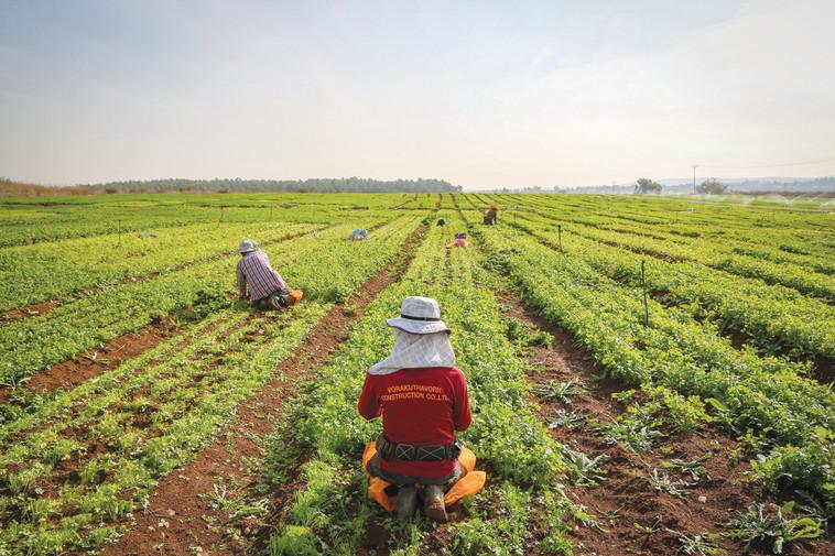 חקלאים באזור בית שמש (צילום: יעקב לדרמן, פלאש 90)
