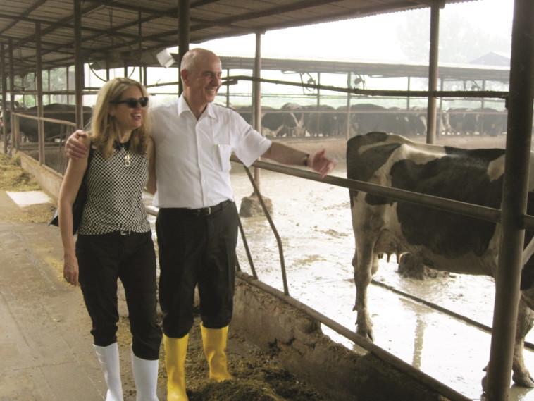 פרה סינית מניבה שליש מפרה ישראלית. מתן וילנאי ואשתו ברפת סינית, צילום משפחתי