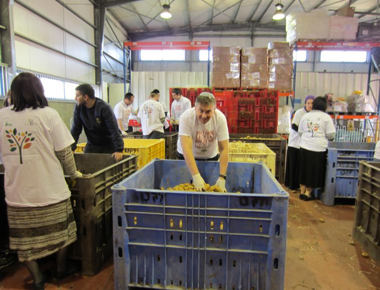 מתנדבים מרכז הלוגיסטי של לקט ישראל. צילום: לקט ישראל