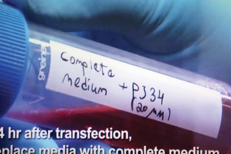 התאים הסרטניים הוכחדו על ידי התרכובת. צילום מסך