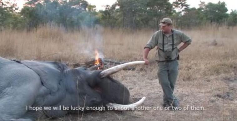 הרוויח הון מציד חיות בדרום אפריקה. טוויטר