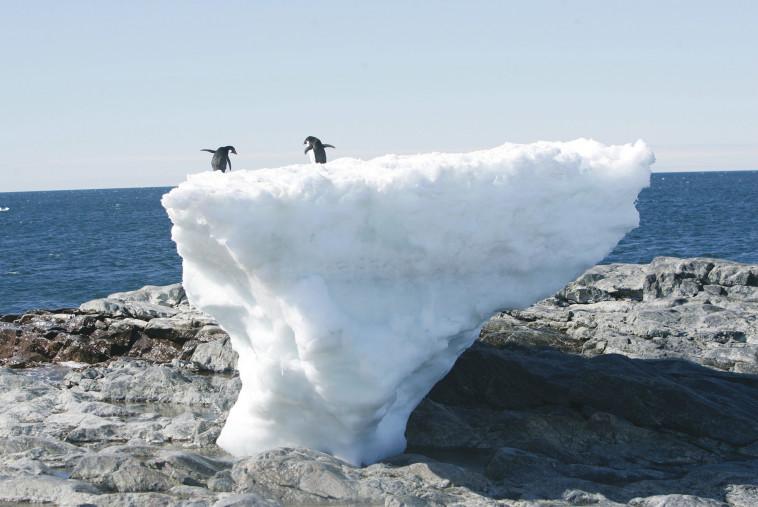 פינגווינים באנטארקטיקה. צילום: רויטרס