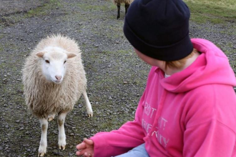 מור עם כבשה מקומית, בעבודת רעיית הצאן. צילום: יוטיוב