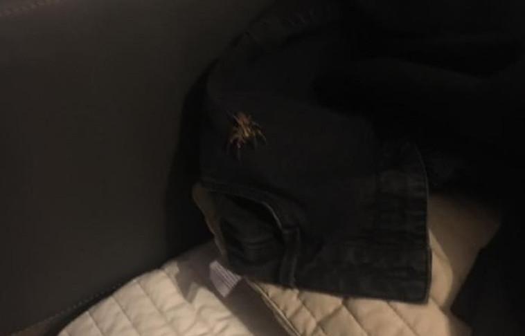 העכביש המפחיד. צילום מסך