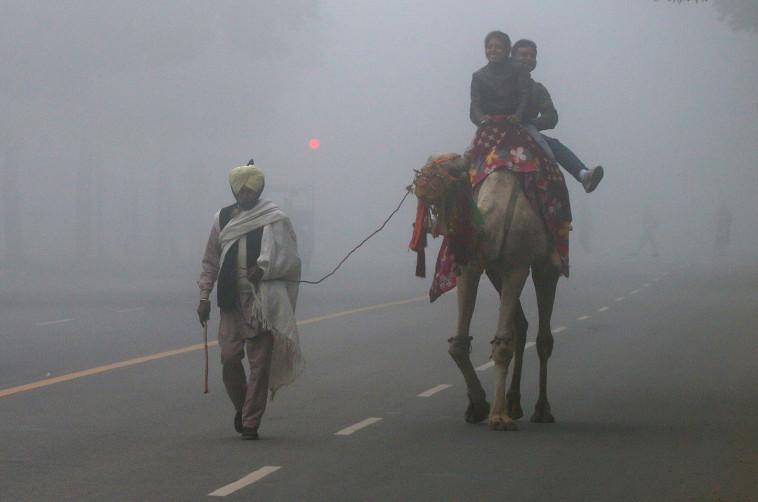 צבע לעומת עוני. גמל בגשם בהודו, צילום: רויטרס