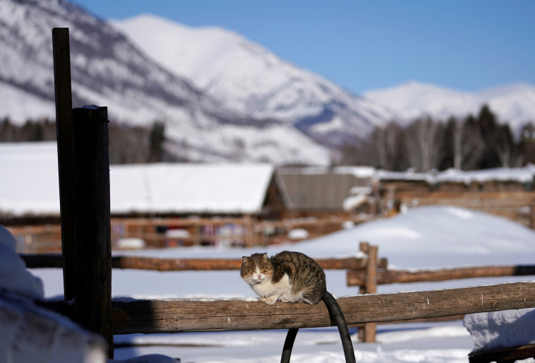 לא רק שועלים, גם חתולים יכולים לדגמן. צילום: רויטרס