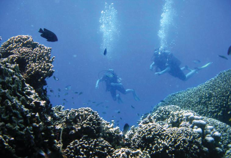 צלילה במדגסקר. צילום: רויטרס