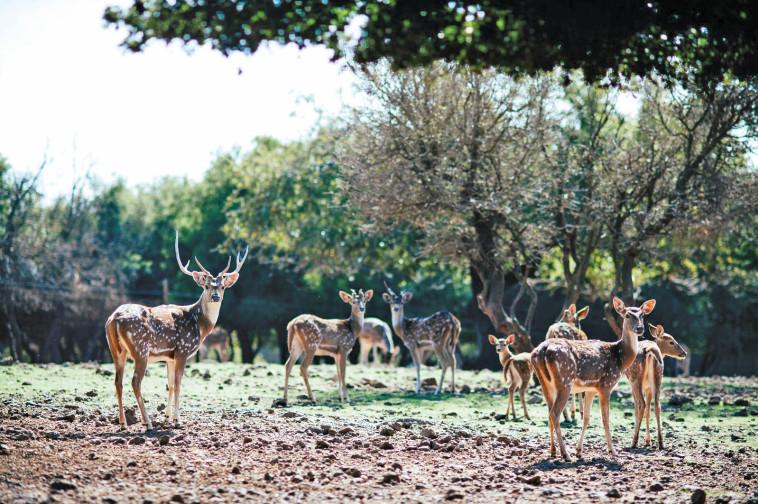 יער האיילים. צילום: מיטל שרעבי, באדיבות תיירות גולן