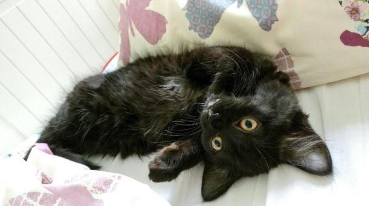 מעדיפה לישון עם החתולה מאשר עם בן הזוג. בתמונה: החתולה החמודה