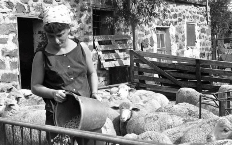 קיבוץ עין זיוון, 1975. צילום: אסף קוטין