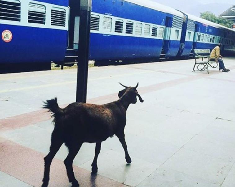 תחנת רכבת בהודו. דרך אינסטגרם