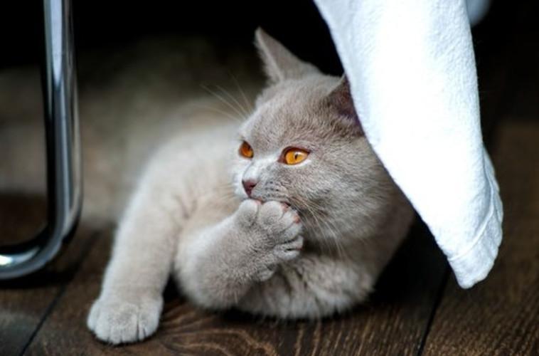 חתולים פחות מסבים אושר לבעליהם מאשר כלבים. אילוסטרציה: פאקסלס