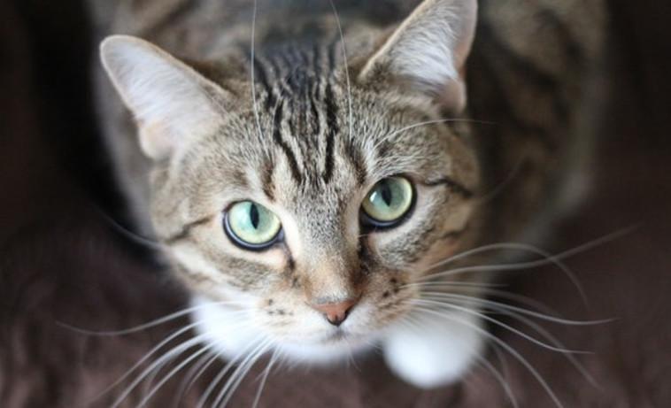 חתול (צילום: pexels)