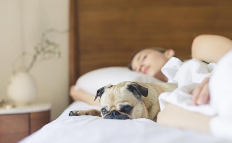 לישון עם כלב, חתול או בן זוג? החלטה קשה. אילוסטרציה:פאקסלס