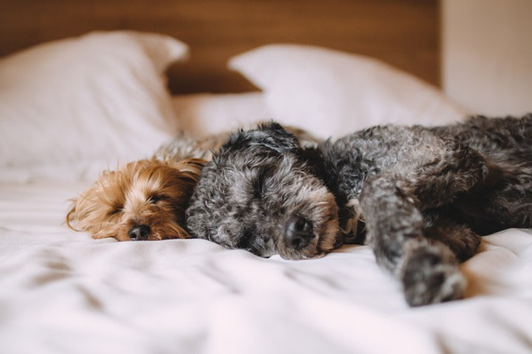 תנומה עוזרת לקום רעננים, בלי לפגוע בשינה בלילה. אילוסטרציה: פיקסאביי