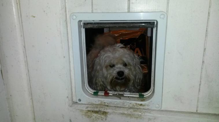 ג'ק בפתח של דלת שיועד לחתולים. צילום: פייסבוק