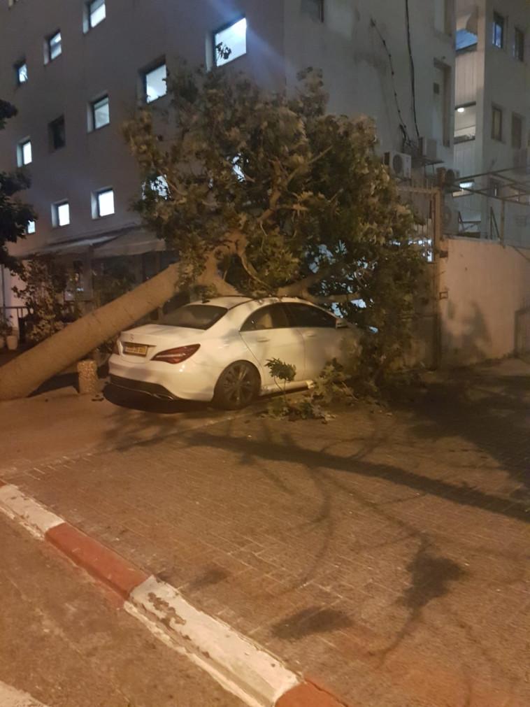 """עץ קרס על רכב ברחוב הנצי""""ב. צילום: יוסי יוסף"""