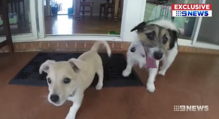 9NEWS :אלפי והכלב השני של המשפחה. צילום מסך