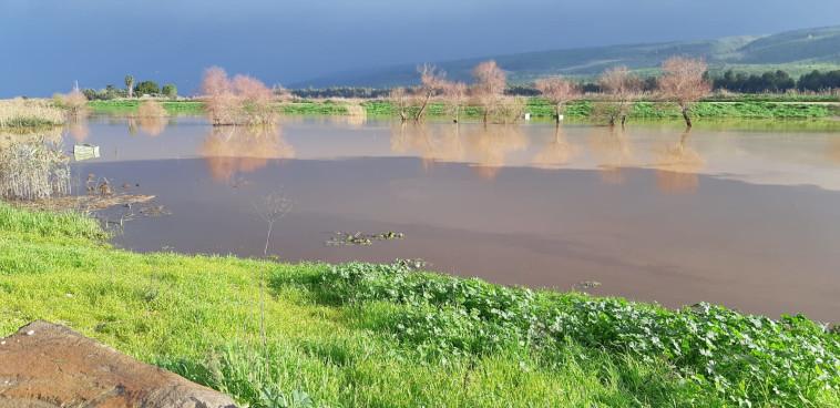נחל דישון נשפך ונמהל במי נהר הירדן. צילום: גיא קולר, רשות הכנרת
