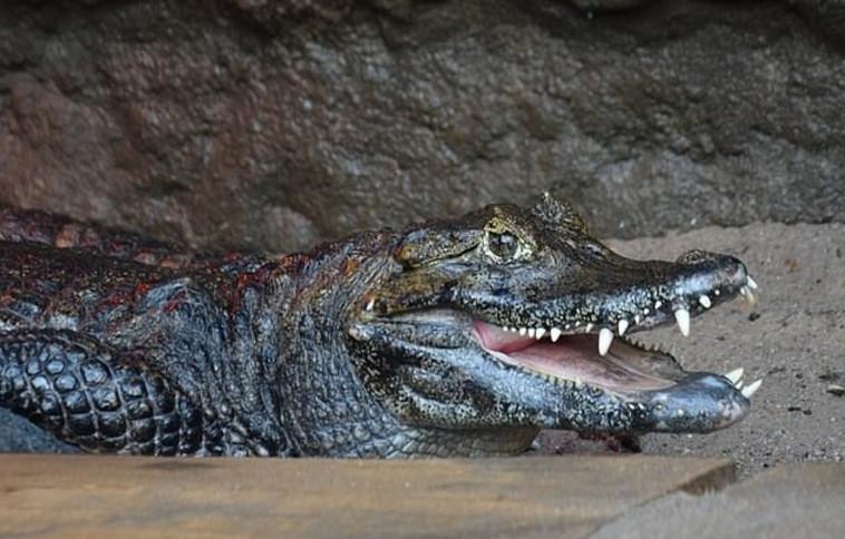 הקטור. צילום: גן החיות פוזנן/פייסבוק