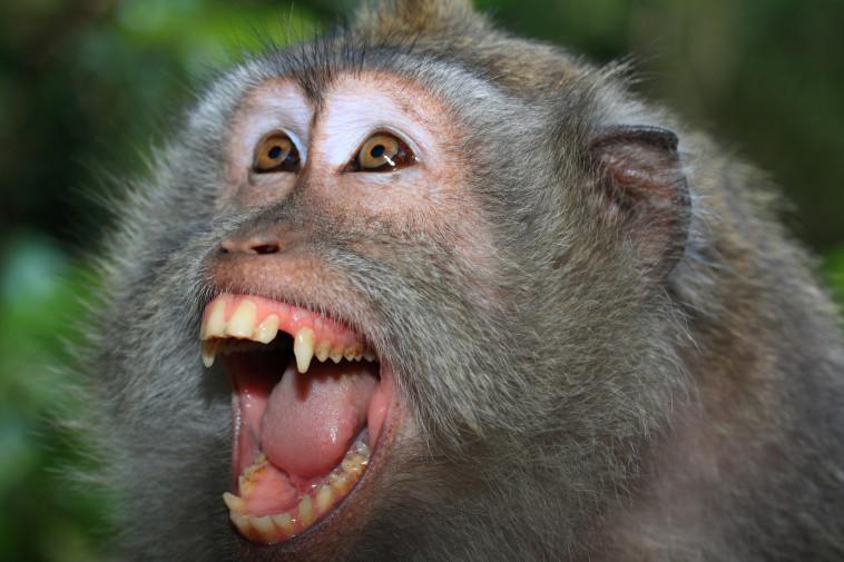 9 ימים של טרור: קוף התפרע ברחובות, הרג אדם ופצע עשרה