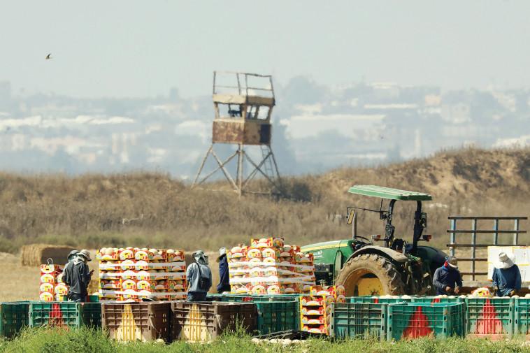 חקלאים בעוטף עזה (צילום: רויטרס)