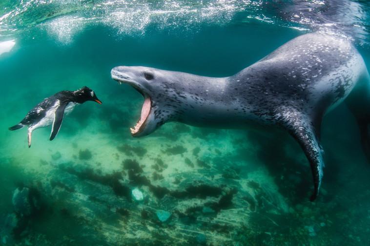 צילום מתחת למים. עמוס נחום,באדיבות הוט 8