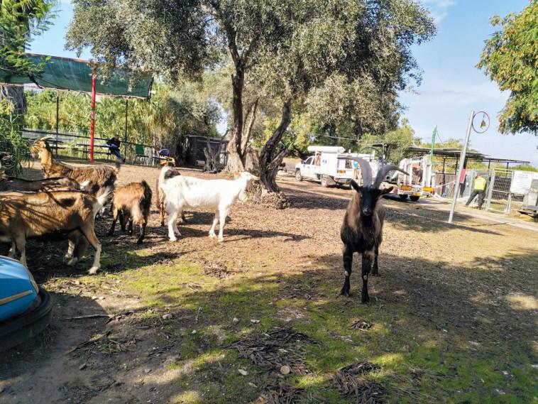 החווה של חוה (צילום: צילום פרטי)