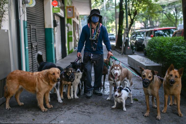 קורונה - גבר עם מסכה מטייל עם כלבים ברחובות מקסיקו (צילום: PEDRO PARDO/AFP via Getty Images)