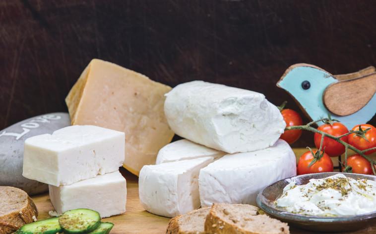 פלטת גבינות - משק שמואלי (צילום: איתן וכסמן)